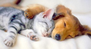 Polyphasic Sleep - Cat and Dog